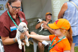When most people think of Game Fair they think of dogs--you'll see just about all of the sporting breeds.